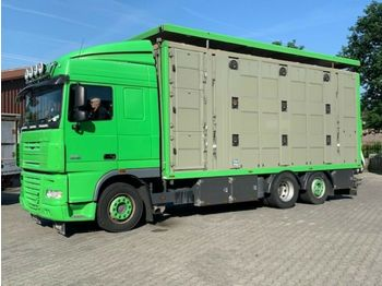 DAF  XF 105/460 SC Menke 3 Stock Hubdach  - camion transport animale